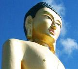 Image for Kiwi Buddha
