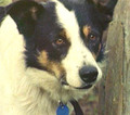 Dogstar-key-image.jpg.120x106