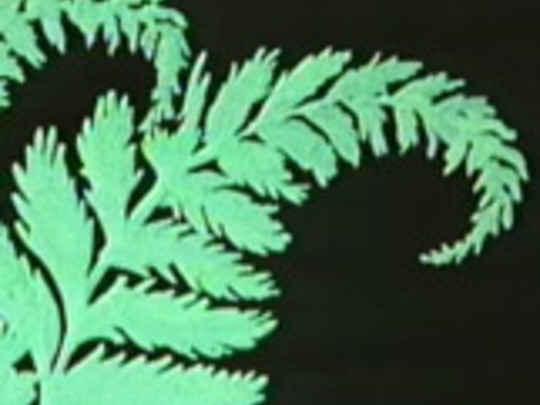 Koha te maori key image.jpg.540x405.compressed