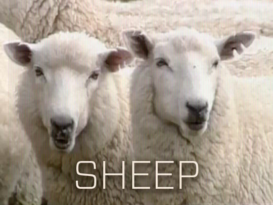 Image for The Sheep Collection
