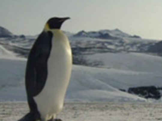 Thumbnail image for Emperors of Antarctica