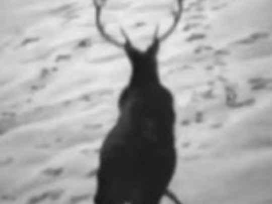 Deer wars key image.jpg.540x405.compressed