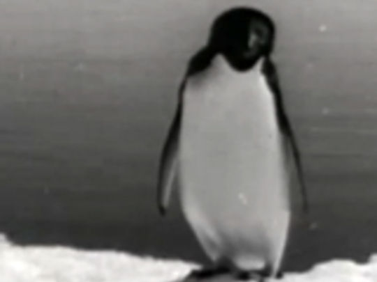 Thumbnail image for Antarctic Adventure