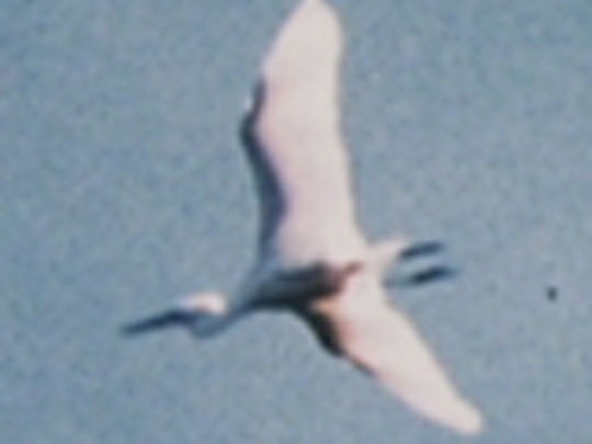 Thumbnail image for Bird of a Single Flight