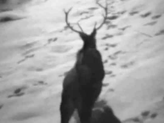 Thumbnail image for Deer Wars