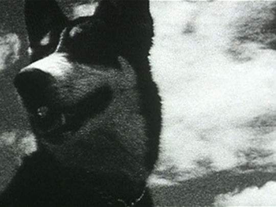 Thumbnail image for This Film is a Dog