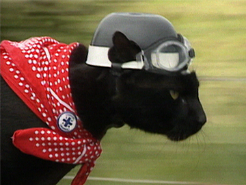 Image for Newsnight - Rastus the Cat