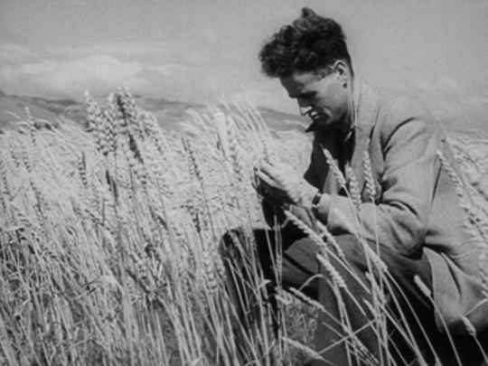 Thumbnail image for Weekly Review No. 337 - Wheat Problem 1948