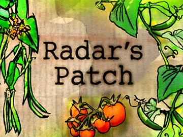 Image for Radar's Patch