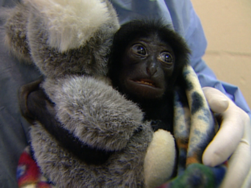 Image for Zoo Babies - Raising Baby Iwani