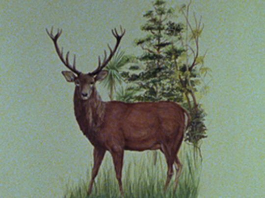Thumbnail image for Red Deer