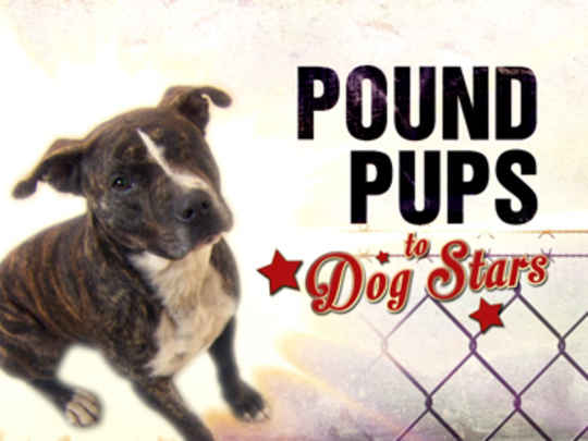 Thumbnail image for Purina Pound Pups to Dog Stars